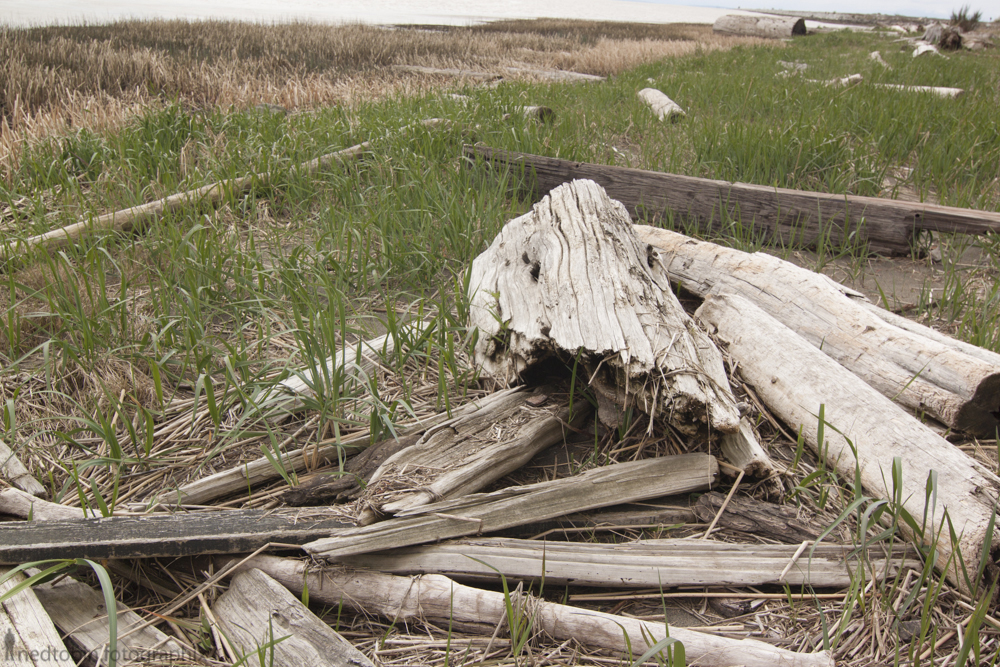 driftwood along the shores in Tsawwassen BC